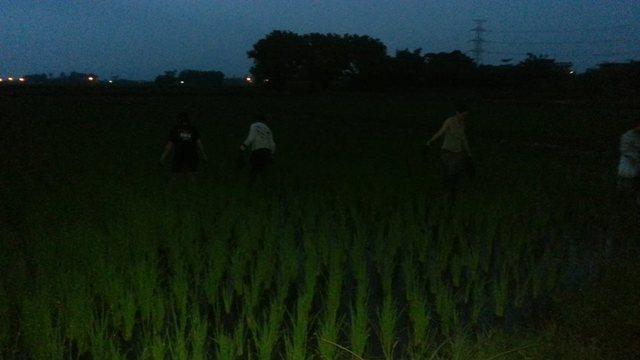 草取り.jpg